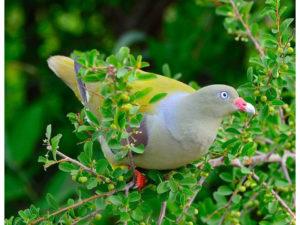 Birding_b