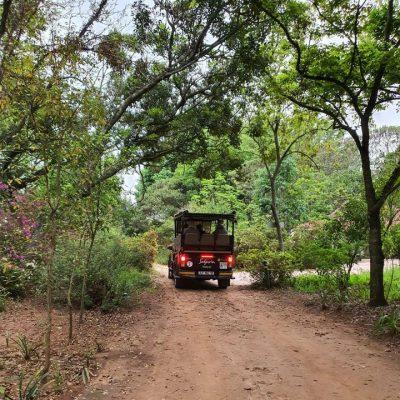 Safaria leaving Heuglins cropped